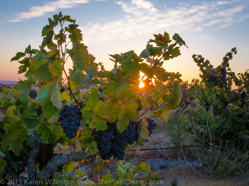 VineyardWinery-31-Edit