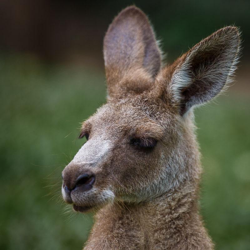 2014_02_19_180725_Cairnes to Kuranda Australia_0149