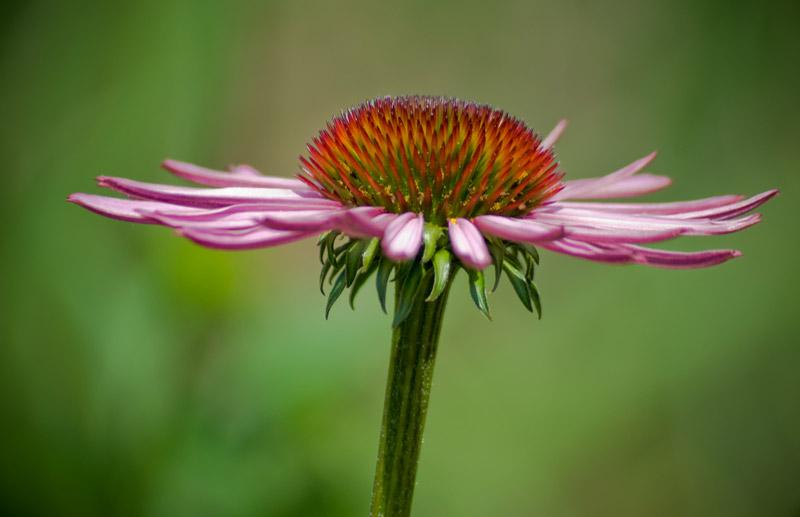 Flower-B