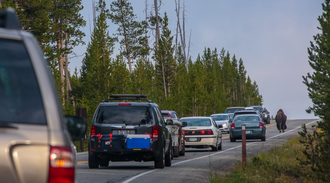 Yellowstone Traffic Jam