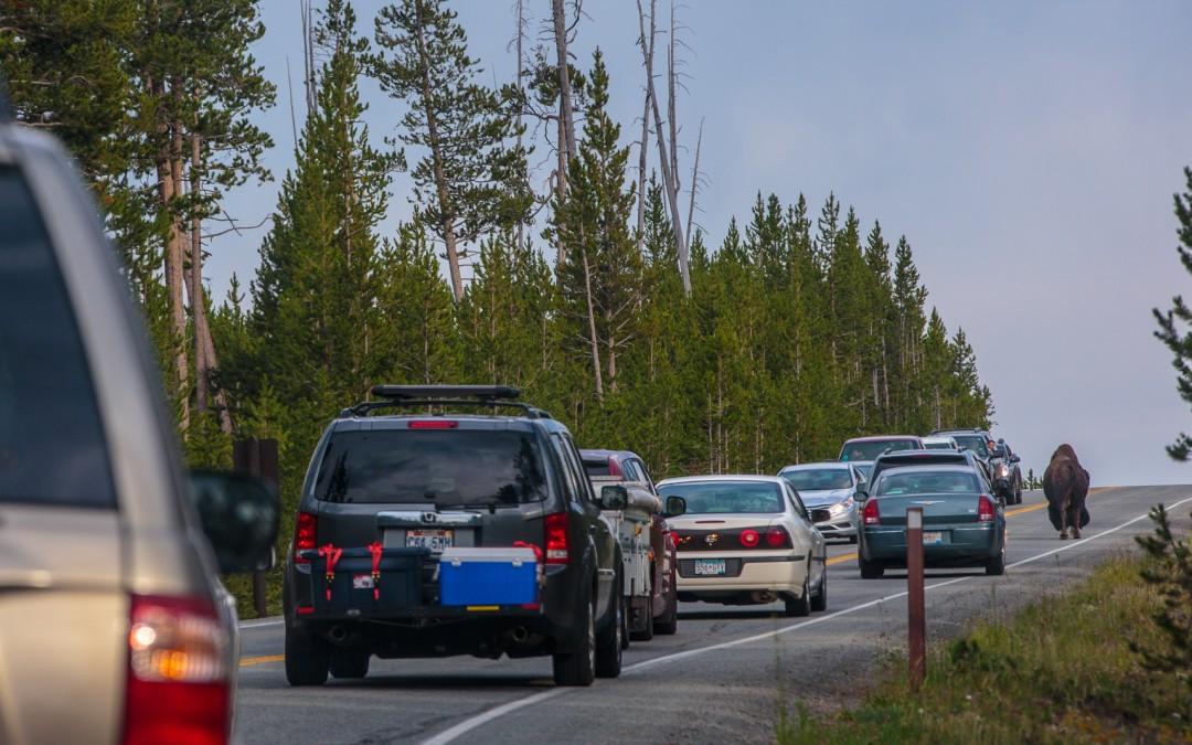 Yellowstone Traffic Jam